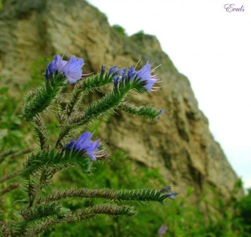 Świat jest piękny, lecz czasami jest nam tak bardzo smutno, że nie dostrzegamy tego..... #góry #rośliny #kwiaty