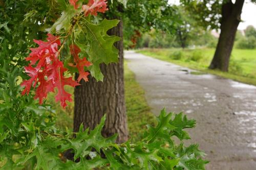 #droga #liście #jesień #szaruga #deszcz