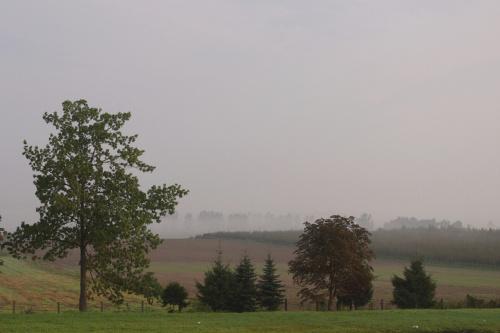 #mgła #krajobraz #drzewa #niebo