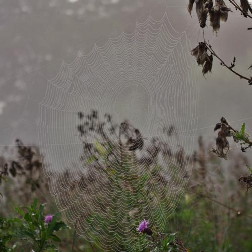 #mgła #łąka #pajęczyna #rosa #natura