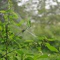 #mgła #rosa #pajęczyna #łąka #natura #chwasty