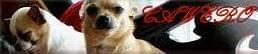Hodowla psów rasowych Cawero