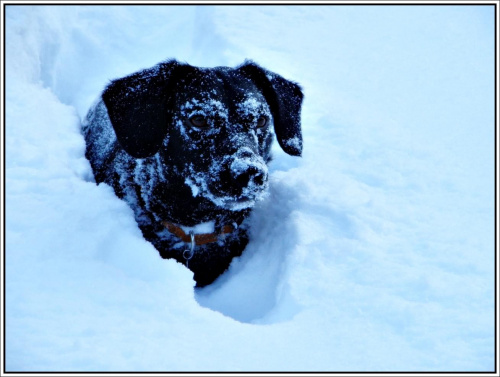 Mój pies Max w śniegowym jeziorku.. ;DD