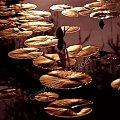 oazis... #nenufary #KwiatyPolskie #przyroda #fotoel