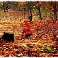 Barwy jesieni... #fotoel #BarwyJesieni #przyroda #las