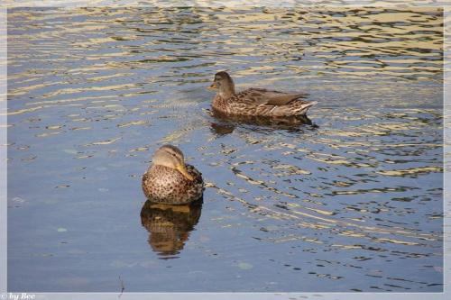 #ptaki #woda