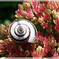 #ślimaki #kwiaty #ogród