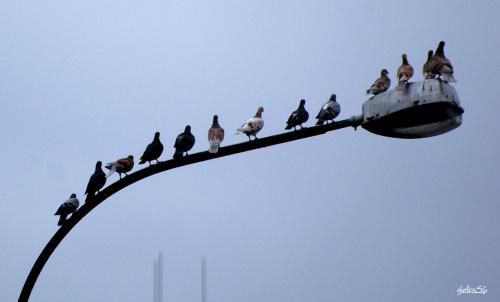 w czasie deszczu gołębie też się nudzą ... :)) #ptaki #gołębie #lato #natura
