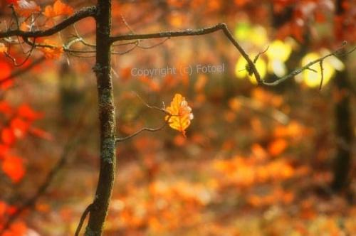 żółty jesienny liść ...