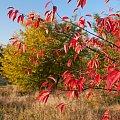 Jesienią malowane... #jesień #natura #flora #drzewo #liść #arietiss