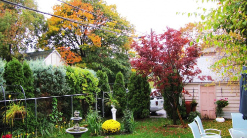 jesien #jesien #deszcz #ogrod