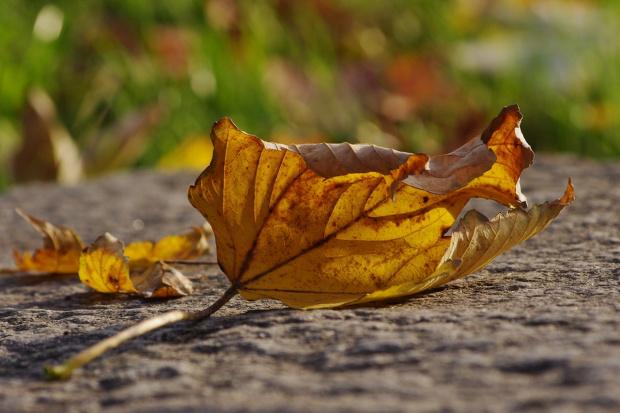 #liść #jesień