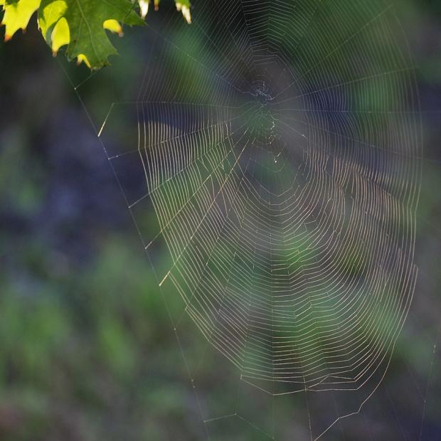 #pajęczyna