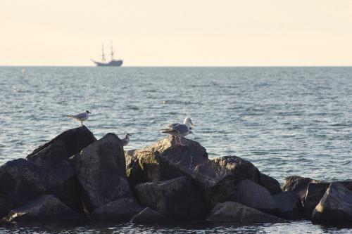 do morza będę wracać co pewien czas; to będzie taki wspomnieniowy przerywnik :) #morze #Bałtyk #mew #statek #Darłówko