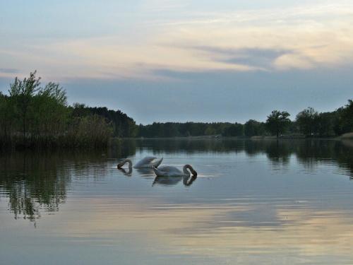 starocie- szkoda gadać, tzn. pisać #zalew #niebo #woda #łabędzie #ptaki #ZachódSłońca