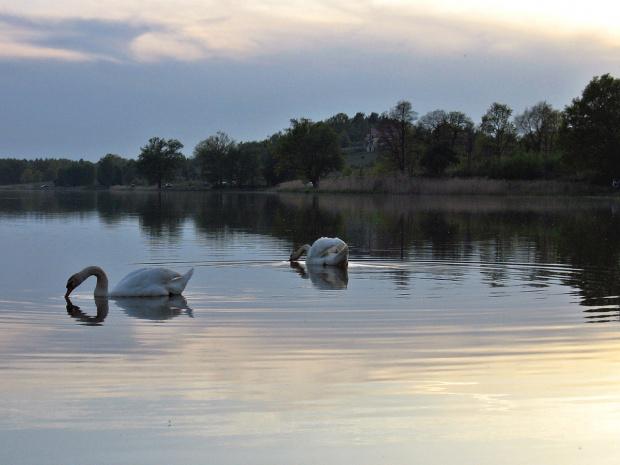 #zalew #niebo #woda #łabędzie #ptaki #ZachódSłońca