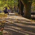 #jesień #ławka #alejka #liście