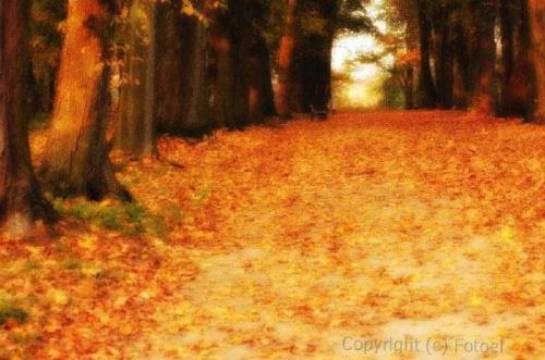 jesienna alejka...