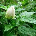 jesień z ogródka ... #kwiaty #róże #chwasty #pokrzywy #ogród #jesień