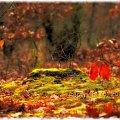 zielony jesienny mech... #przyroda #krajobraz #pejzaż #jesień #fotoel