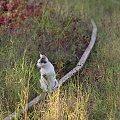 #tory #jesień #kot