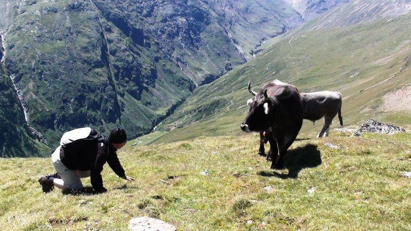Tirol -Austria I....