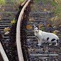 #jesień #tory #kot