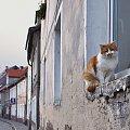 i znowu kot :) #Lubsko #ulica #kot