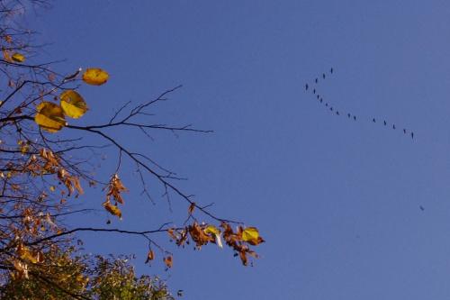 #jesień #ptaki #OdlotPtaków #niebo