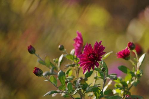 #kwiaty #jesień