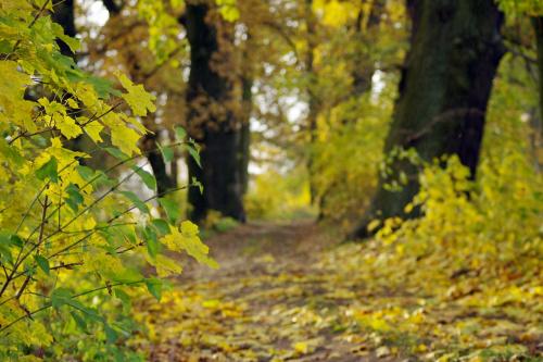 #jesień #liście #drzewa #PolnaDroga
