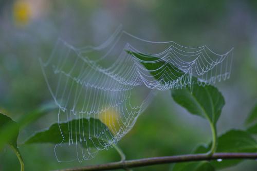 Już jest ok :) Mogę oglądać zdjęcia! #pajęczyna