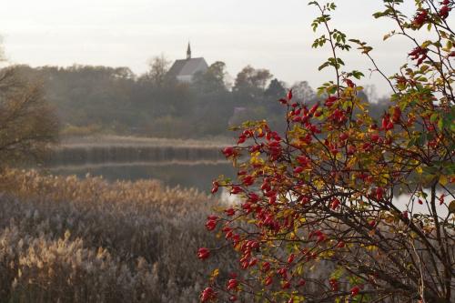 #DzikaRóża #kościół #jezioro #Lubięcin