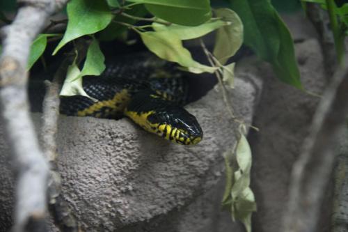 ......ukryty smok 2 :) #wąż #zoo