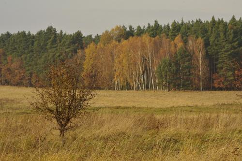 #jesień #listopad