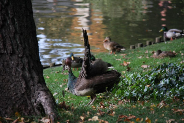 #ptaki #ptak #paw
