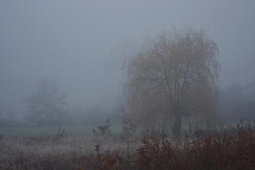 #mgła #drzewa #łąki #ranek