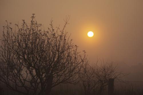 #rano #mgła #słońce #WschódSłońca