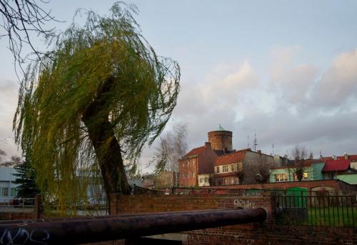 #Lubsko #drzewo #wiatr #wierzba