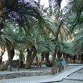 słynna palmowa plaża w Vai na Krecie #Amoudara #Kavousi #Tourloti #MesaMouliana #Chamezi #AgiaFotia #PanagiaAkrotiriani #Vai #Itanos #Enmoupoli #Kreta #EccoHoliday #Sun24 #monastyry