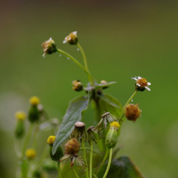 #natura #rośliny #rosa