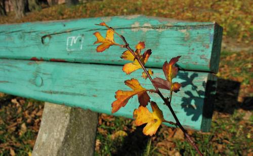 #ławka #liście #jesień