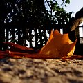 żółty jesienny liść..;) #liść #jesień #płot