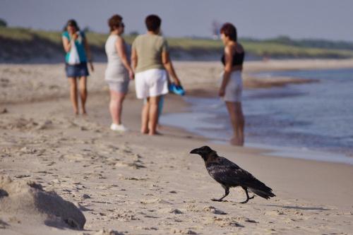 znowu garść letnich wspomnień :) #plaża #morze #Bałtyk #Darłówko