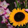 różności ... z szuflady ... #bukiet #kwiaty #słoneczniki