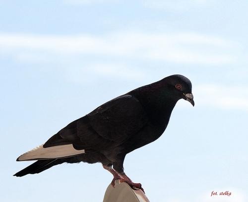 ptaszki ... #ptaki #gołębie #balkon