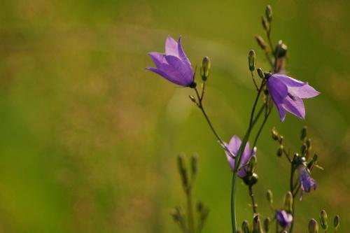 #lato #łąka #natura