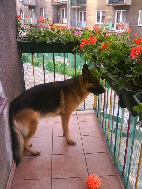 Obserwator - czyli Haker na balkonie