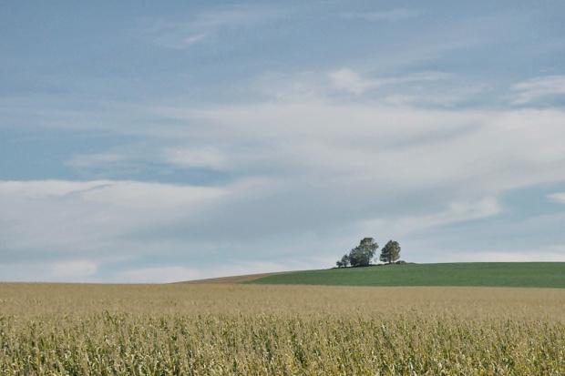 z wycieczki, z okien autokaru #Niemcy #krajobraz