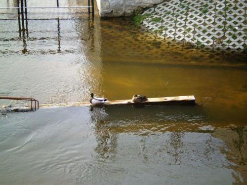 Most w remoncie...:-)